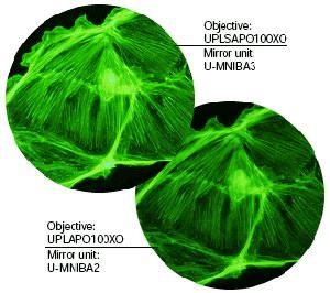 IX71,IX81倒置显微镜
