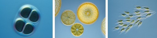 Algacount R100藻类辅助鉴定计数仪