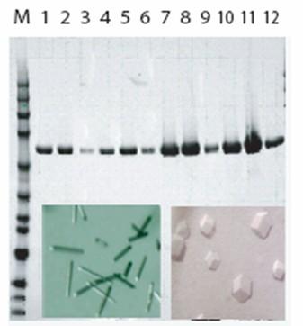 美国Emerald BioSystems Protein Maker全自动蛋白纯化系统