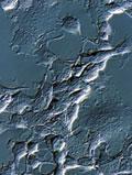 奥林巴斯CKX31/CKX41临床倒置显微镜