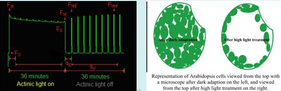 OS-5p+便携式脉冲调制叶绿素荧光仪
